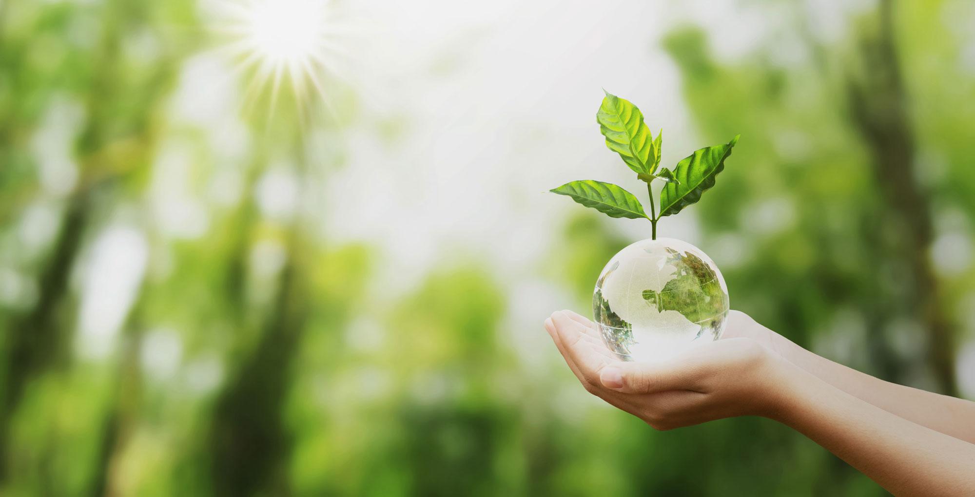 abono-ecologico-almendros