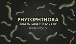 phytophthora almendro